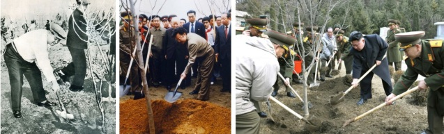 Kim Il Sung (L), Kim Jong Il (C) and Kim Jong Un ceremoniously planting trees over the years (Photos: Foreign Languages Publishing House, KCNA-Yonhap, Rodong Sinmun, Party History Institute)
