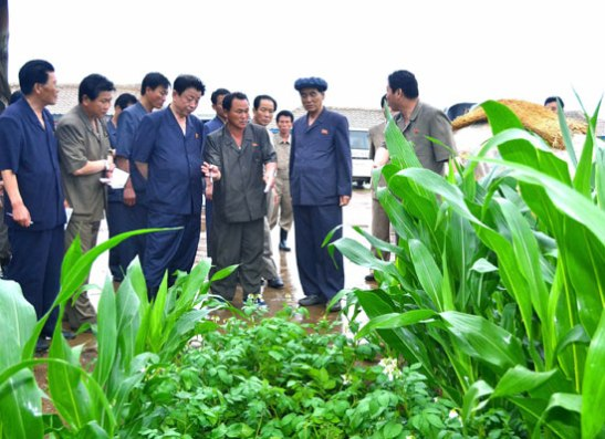 Pak Pong Ju (2nd R) tours the Naejung Cooperative Farm in Yomju County, North P'yo'ngan Province (Photo: Rodong Sinmun).