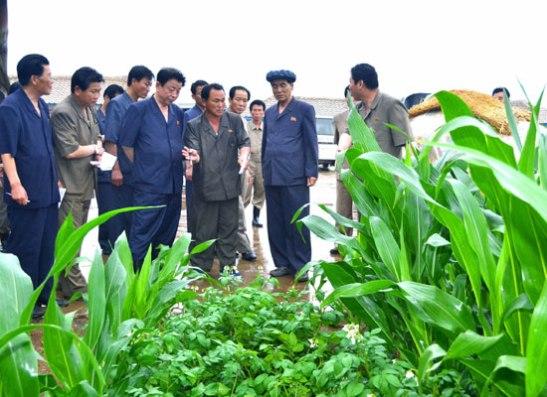 Pak Pong Ju (2nd R) tours the Naejung Cooperative Farm in Yomju County, North P'yo'ngan Province (Photo: Rodong Sinmun).