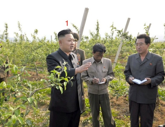 Kim Jong Un (1) tours pomiculture plantings at Kosan Fruit Farm (Photo: Rodong Sinmun).