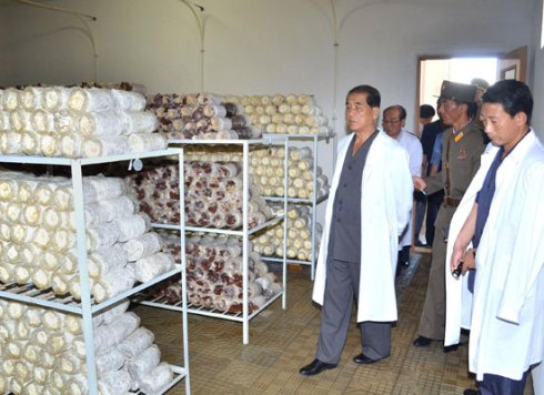 DPRK Premier Pak Pong Ju (L) inspects a mushroom production facility operated by the Korean People's Army (Photo: Rodong Sinmun).