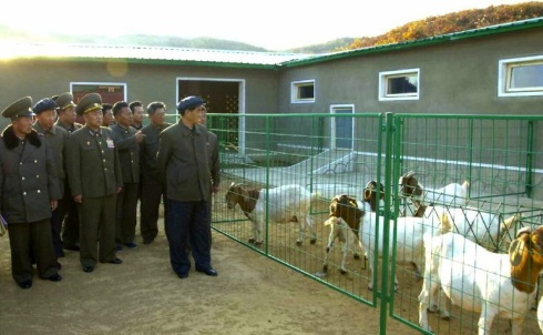 DPRK Premier Pak Pong Ju tours KPA Breeding Farm #621 (Photo: Rodong Sinmun).