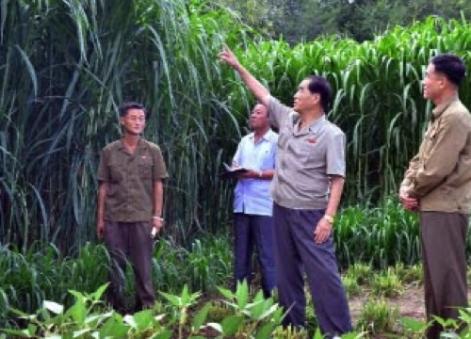 DPRK Premier Pak Pong Ju visits Farm #1116 (Photo: Rodong Sinmun).