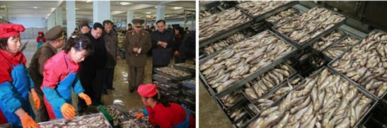 Kim Jong Un inspects a processing shop at the August 25 Fishery Station (Photo: Rodong Sinmun).