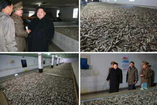 Kim Jong Un looks through a processing shop at Fishery Station #15 (Photo: Rodong Sinmun).