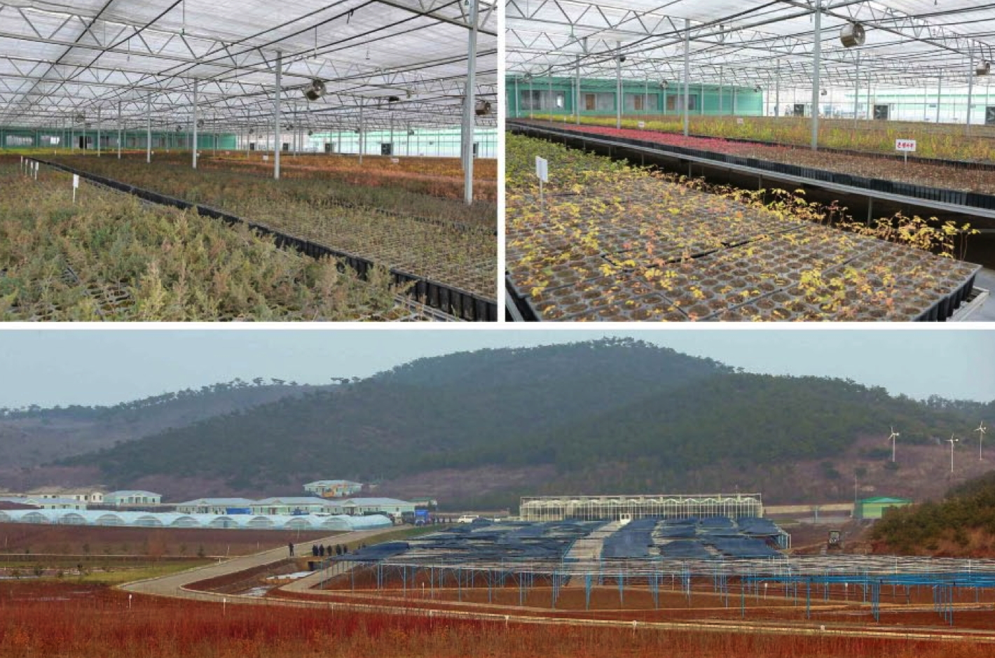 KPA Tree Nursery #122 (Photos: KCNA)