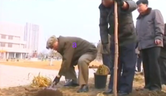 Workers' Party of Korea Secretary and Director of the WPK Propaganda and Agitation Department Kim Ki Nam (a) shovel dirt over a tree planting at Mangyo'ngdae Schoolchildren's Palace in Pyongyang on March 2, 2016 (Photo: KCTV screen grab).