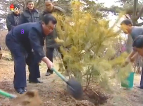 WPK Secretary for Light Industry O Su Yong shovels dirt over a tree at Moran Hill in Pyongyang on March 2, 2016 (Photo: KCTV screen grab).