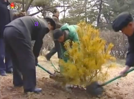 DPRK Premier Pak Pong Ju (a) shovels dirt over a tree planting at Moran Hill in Pyongyang on March 2, 2016 (Photo: KCTV screen grab).
