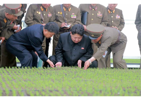 Kim Jong Un is briefed about cultivation at the tree nursery (Photo: Rodong Sinmun).