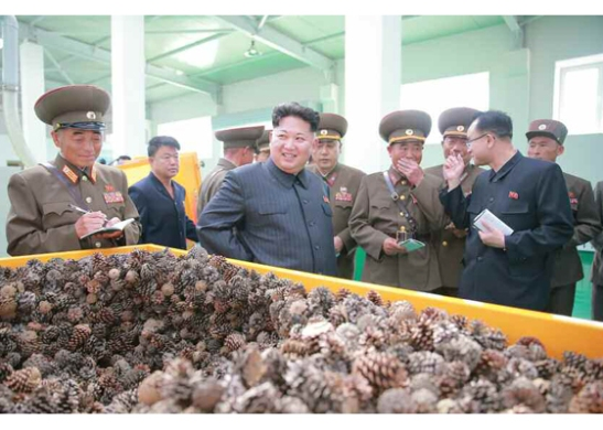 Kim Jong Un looks at a vat of pine cones (Photo: Rodong Sinmun).