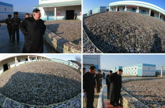 Kim Jong Un tours the August 25 Fishery Station in photos which appeared on the bottom-right of the front page of the November 20, 2016 edition of the WPK daily newspaper Rodong Sinmun (Photos: KCNA/Rodong Sinmun).