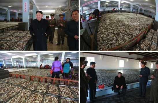 Kim Jong Un tours the salt fish preparation and storage areas in photos which appeared top-left of page 2 of the November 20, 2016 edition of the WPK daily organ, Rodong Sinmun (Photos: Rodong Sinmun/KCNA).