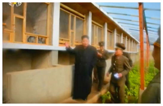 Kim Jong Un tours the greenhouse and rabbit cages on Changjae Islet (Photo: Korean Central Television).