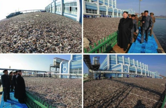 Photos of Kim Jong Un's tour of the May 27 Fishery Station which appeared on the bottom right of the cover of the November 17, 2016 edition of Rodong Sinmun (Photos: KCNA/Rodong Sinmun).