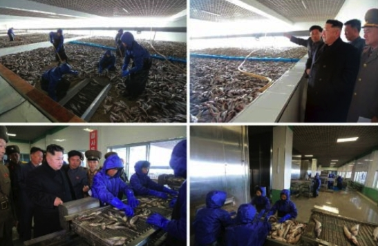 Photos of Kim Jong Un's tour of a processing facility at May 27 Fishery Station which appeared on the top-right of page 2 of the November 17, 2016 edition of Rodong Sinmun (Photos: Rodong Sinmun/KCNA).