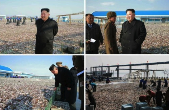 Photos of Kim Jong Un's visit to the January 8 Fishery Station which appeared on the top left of page 4 of the November 17, 2016 edition of the WPK daily organ Rodong Sinmun (Photos: KCNA/Rodong Sinmun).