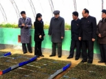 SPA Presidium President Kim Yo'ng-nam is briefed about sapling cultivation at a Forest Management Station Nursery in Chungsan County, South P'yo'ngan Province in a photo which appeared on the bottom left of page 2 of the November 22, 2016 edition of the WPK daily newspaper Rodong Sinmun (Photo: Rodong Sinmun).